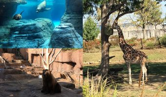 Zoo and Aquarium